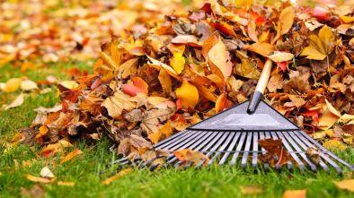 nettoyage automne