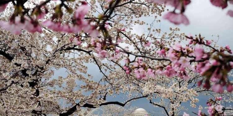 comme-cette-annee-le-printemps-tombera-le-20-mars-tous-les-ans-jusqu-en-2102-a-une-exception-pres-en-2044-il-tombera-le-19-mars